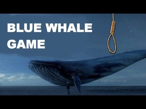 Bluewhale Game